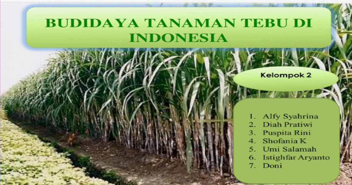 5572119f497959fc0b8f3ef9 - Jenis Jenis Tebu Di Indonesia