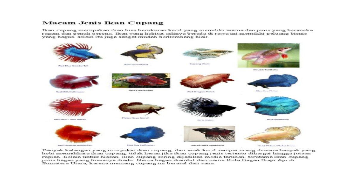 Unduh 86 Gambar Ikan Cupang Dan Namanya HD Terbaru
